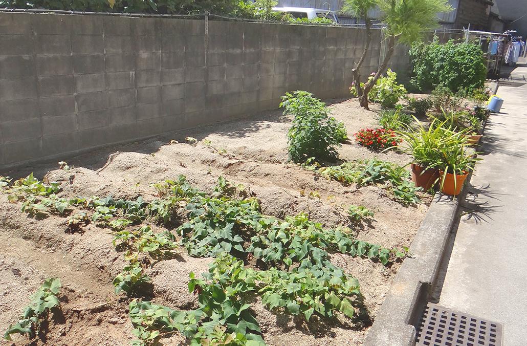 畑で野菜や花も育てます!